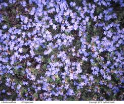 Purple And Blue Flowers Blue Flowers That Bloom In Spring Flower Ideas