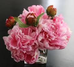 Peony Arrangement Peonies In Faux Water Orchid Peony Arrangement Shabby Chic