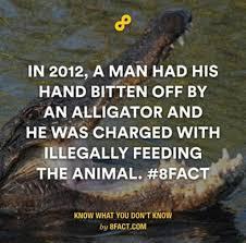 Alligator Memes - the best alligator memes memedroid
