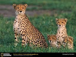 african safari animals african safari