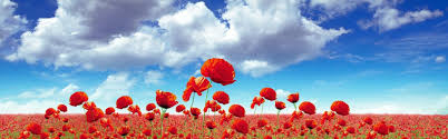 field of poppies wallpaper 50 images