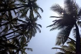 paradise found kona hilo and waikiki gusto u0026 grace