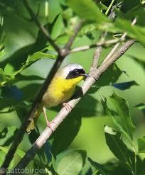 Nc Backyard Birds Wright U0027s Birding Center Your Backyard Birding Center Since 1983