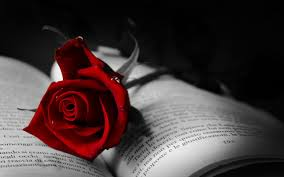 Book Wallpaper by Book With Red Rose Wallpaper Allwallpaper In 6210 Pc En
