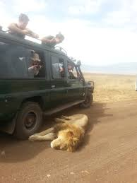 safari serengeti safaris