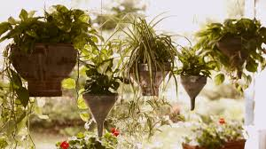 Plants For Patios In The Shade Container Garden Plans