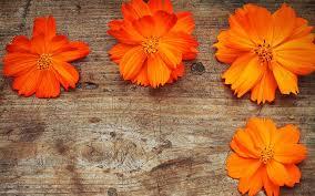wood flowers orange flowers wood 7029430