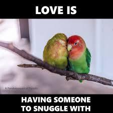 Parrot Meme - 49 best parrots images on pinterest parrots parakeets and budgies