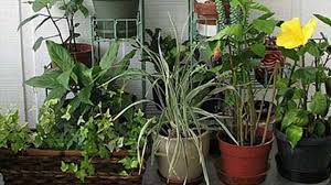 basic rules of maintaining plants in indoor gardening how often