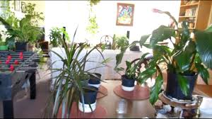 indoor jungle tropical clean air oxygen garden youtube