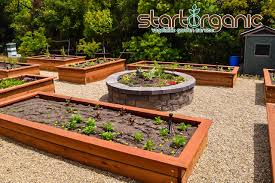 raised bed vs in ground vegetable garden options startorganic