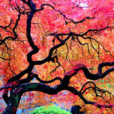 most interesting trees in the world popsugar smart living