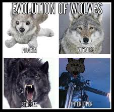 Wolf Meme - the official long dark memes thread fan creations art fiction