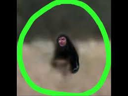 oklahoma wood myakka wood ape revealed