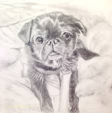 drawings sketches pet portraits ilene rubin bucks county