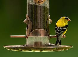 Magpie Birds In Backyards What Foods For What Birds Bird Watcher U0027s Digest