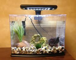 Betta Fish Aquarium Decorations