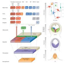 interneuron cell types are fit to function nature nature research