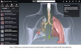 Human Anatomy Pic Human 3 0 Chrome Web Store