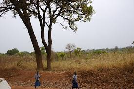native plants of africa a forest for the trees uganda wild forests u0026 fauna