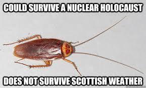 Scottish Memes - scottish meme google search fun bun pinterest meme and scotland