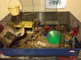 How Much Is A Hamster Cage Kevin 82 Hammy Happenings