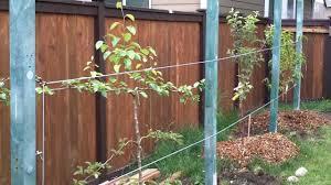 backyard fruit orchard part 2 youtube