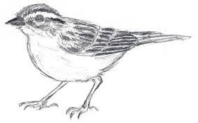 symbol sparrow u2013 judith monroe