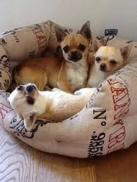 Cute Puppy Beds Pin Worthy Pictures Of The Cutest Puppies In The World Awww