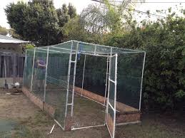 backyard flock of 10 hens u0026 2 ducks in southern ca need a home