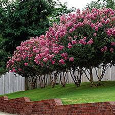 seasonal color and flowering trees landscape design