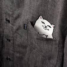 imagenes groseras de gatos el gato escondido en el bolsillo de estas camisetas tiene una