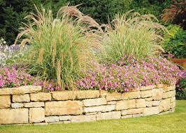 how to select ornamental grasses for your garden garden club