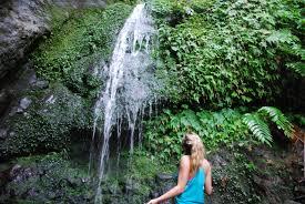 hiking through the nevisian rainforest in st nevis west indies