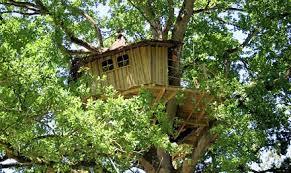 chambre dans un arbre chambres d hôtes insolites cabane dans les arbres en