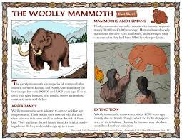 woolly mammoth facts for social studies printables