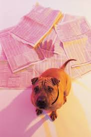 Dogs On Laminate Floors How To Clean Dog Urine From A Laminated Floor Ehow Uk Idolza