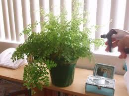 indoor house plants watering u0026 decorating dengarden