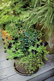 Outdoor Pots And Planters by Fall Container Gardening Ideas Southern Living