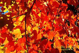 fall foliage wallpaper for desktop wallpapersafari