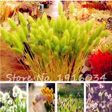 popular grass seed buy cheap grass seed lots from