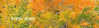 fall autumn autumn fall colors ultra high definition stock photos by pixel