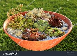 Small Rock Garden Pictures by Beautiful Rock Garden Cultivated Small Basin Stock Photo 58819171