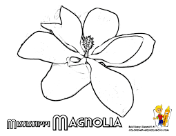 State Flower Of Montana - tennessee state flower coloring page iris usa coloring pages