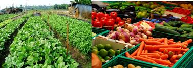 urban vegetable farming how to make passive income from your