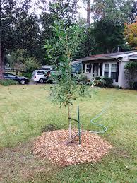pruning u0026 mulching workshops savannah tree foundation