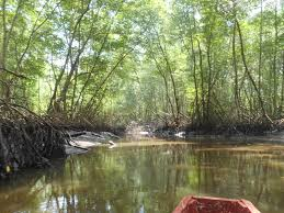 backpacking in el salvador boat tour of crocodile creek at