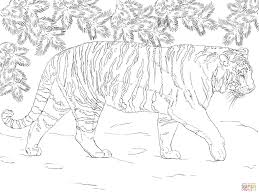 siberian tiger coloring page free printable coloring pages