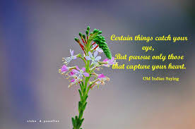 quotes beauty music flowers and beauty aitchison quote ucyour outer will capture the