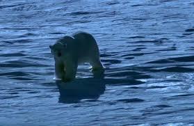 Two Polar Bears In A Bathtub Frozen Planet Scandal Sir David Attenborough Defends Fake Polar
